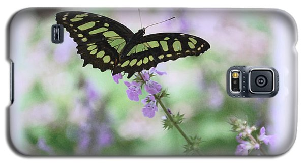 Galaxy S5 Case featuring the photograph Butterfly 8 by Leticia Latocki