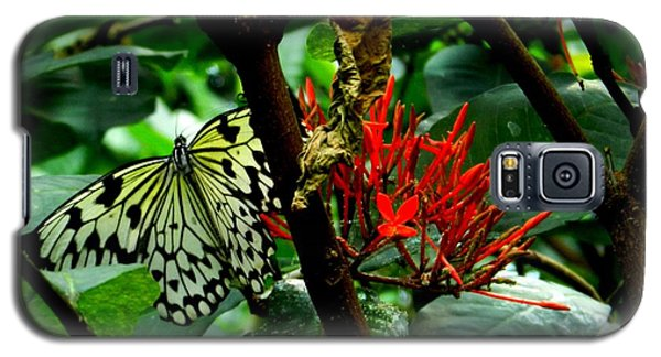 Galaxy S5 Case featuring the photograph Butterfly And Blossom by Karen Molenaar Terrell