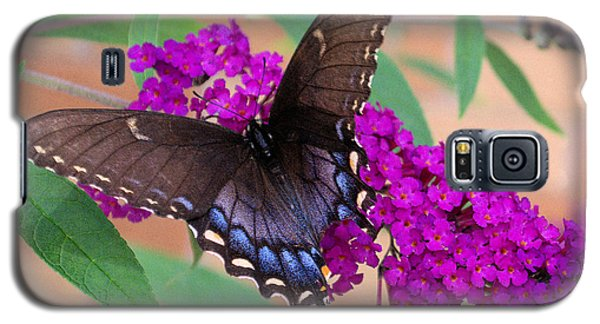 Butterfly And Friend Galaxy S5 Case by Luther Fine Art