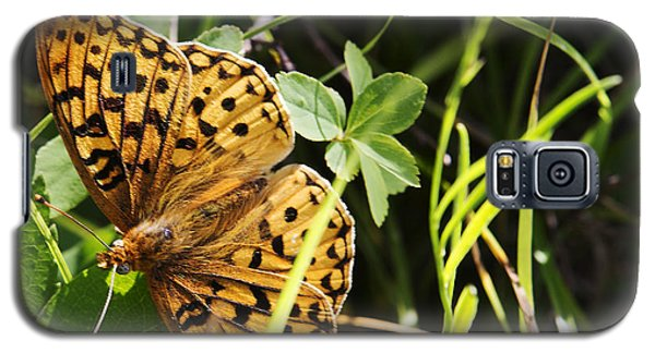 Butterfly At Signal Mountain Galaxy S5 Case by Belinda Greb