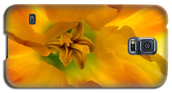 Butterfly Daffodil Springtime Galaxy S5 Case