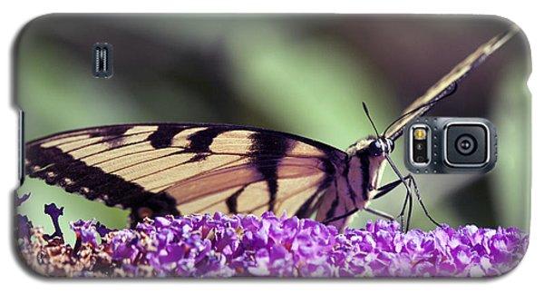 Butterfly Feeding Galaxy S5 Case