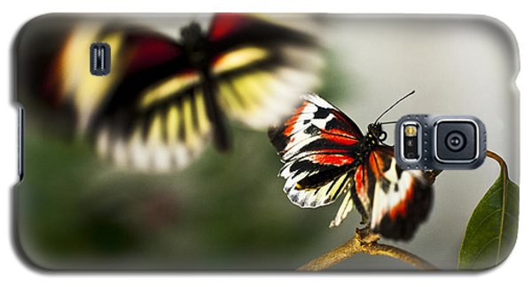 Galaxy S5 Case featuring the photograph Butterfly In Flight by Bradley R Youngberg