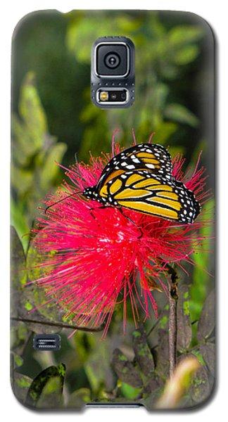 Butterfly In Flower Bush Galaxy S5 Case