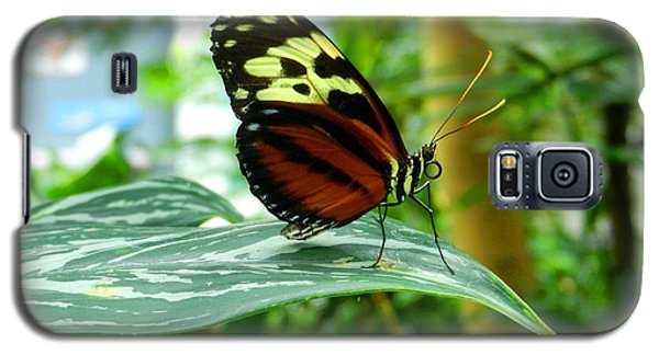 Galaxy S5 Case featuring the photograph Butterfly In Profile by Karen Molenaar Terrell