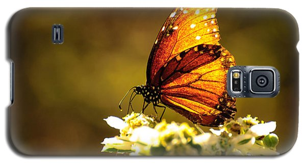 Butterfly In Sun Galaxy S5 Case
