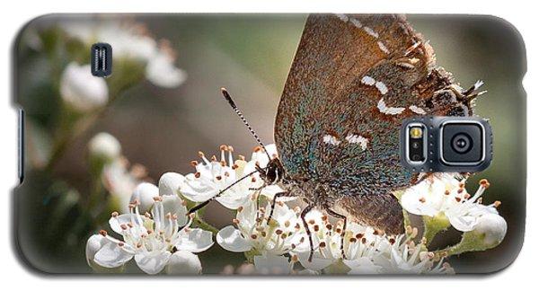 Butterfly In The Garden Galaxy S5 Case