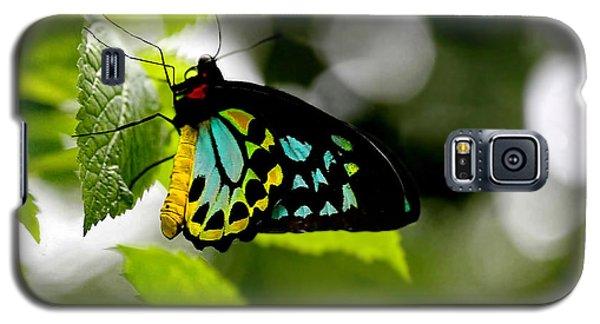 Butterfly Iv Galaxy S5 Case by Tom Prendergast