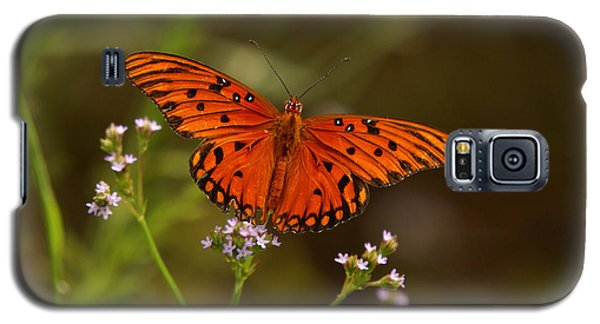 Galaxy S5 Case featuring the photograph Butterfly by J Cheyenne Howell