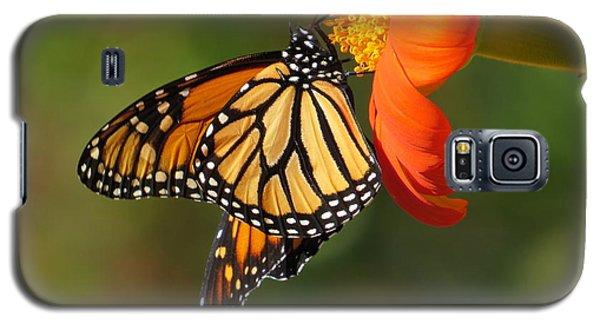 Butterfly Kiss 2 Galaxy S5 Case by Jeanette Oberholtzer