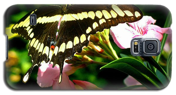 Galaxy S5 Case featuring the photograph Butterfly by Kristine Merc