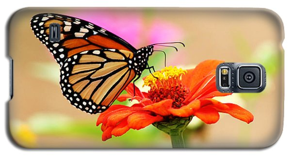 Butterfly Lunch Galaxy S5 Case