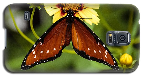 Butterfly On Coreopsis Galaxy S5 Case