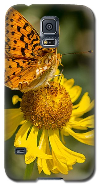 Butterfly On Daisy Galaxy S5 Case
