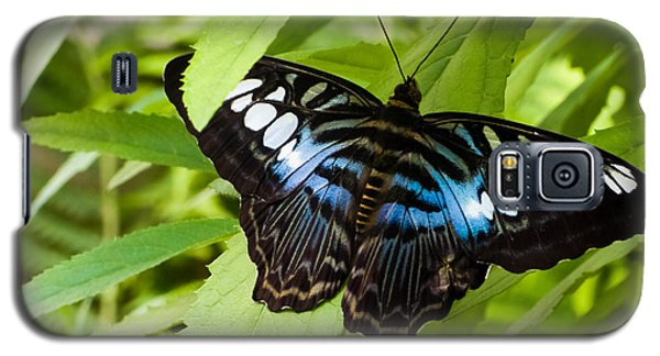 Butterfly On Leaf   Galaxy S5 Case