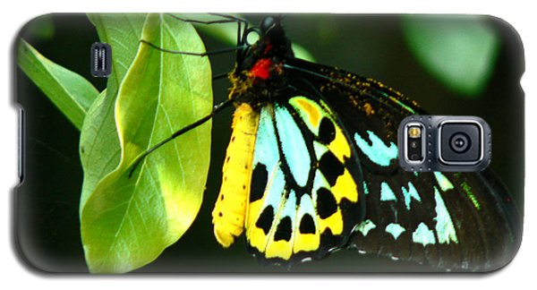 Butterfly On Leaf Galaxy S5 Case by Laurel Powell