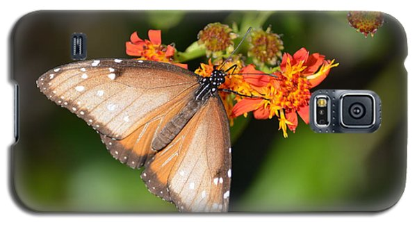 Galaxy S5 Case featuring the photograph Butterfly On Mexican Flame by Debra Martz