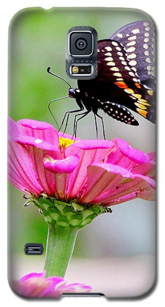 Butterfly On Pink Flower Galaxy S5 Case
