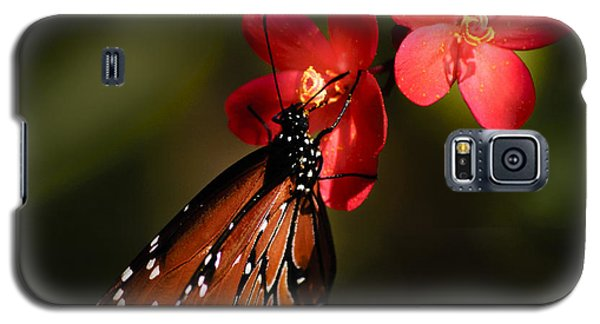 Butterfly On Red Blossom Galaxy S5 Case