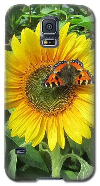 Butterfly On Sunflower Galaxy S5 Case