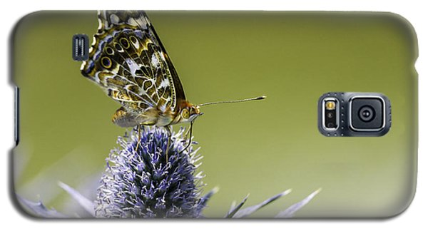 Galaxy S5 Case featuring the photograph Butterfly On Thistle by Peter v Quenter