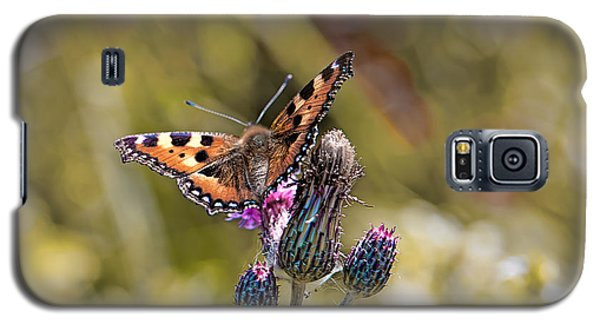 Butterfly On Tistle Sep Galaxy S5 Case