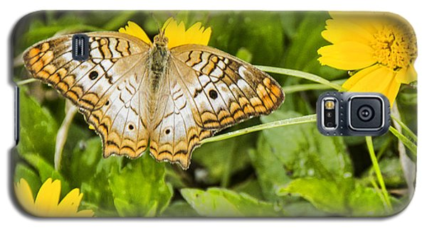 Butterfly On Yellow Flower Galaxy S5 Case
