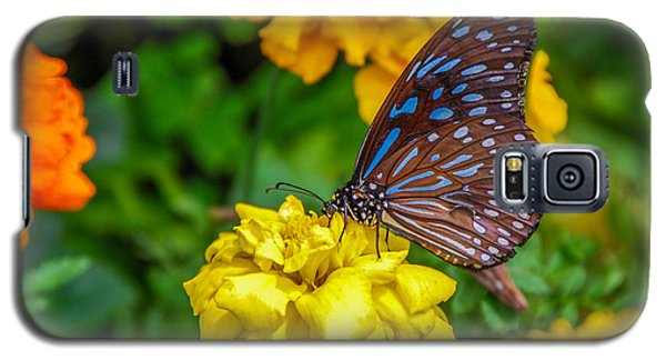 Butterfly On Yellow Marigold Galaxy S5 Case