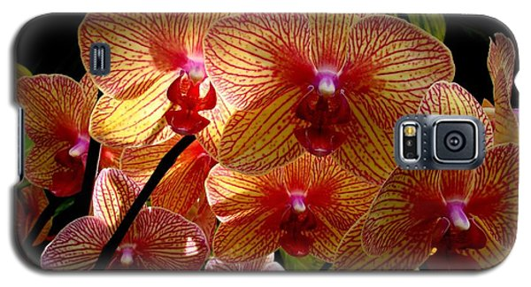 Galaxy S5 Case featuring the photograph Butterfly Orchids by Rodney Lee Williams