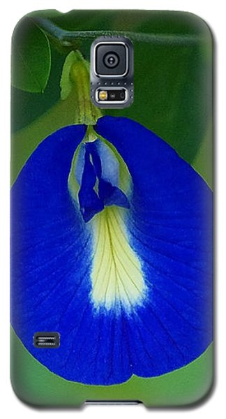 Galaxy S5 Case featuring the photograph Butterfly Pea by Blair Wainman