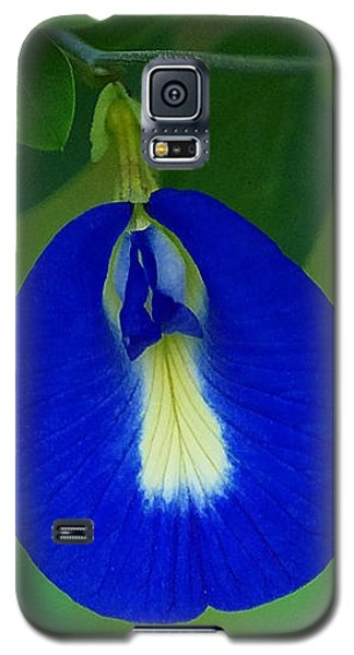 Butterfly Pea Galaxy S5 Case by Blair Wainman