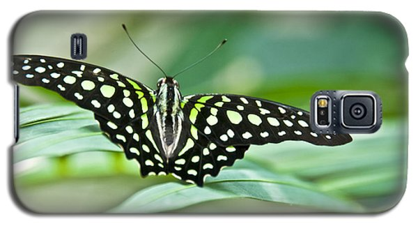Butterfly Resting Color Galaxy S5 Case