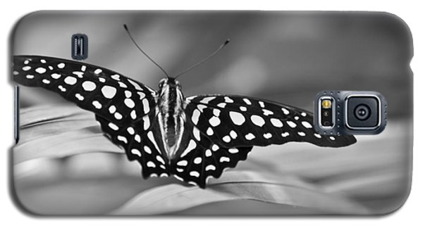 Butterfly Resting Galaxy S5 Case