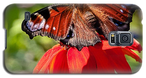 Galaxy S5 Case featuring the photograph Butterfly by Sergey Simanovsky
