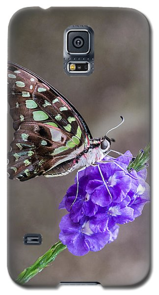 Butterfly - Tailed Jay I Galaxy S5 Case