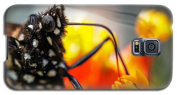 Galaxy S5 Case featuring the photograph Butterfly Tongue Squared by TK Goforth