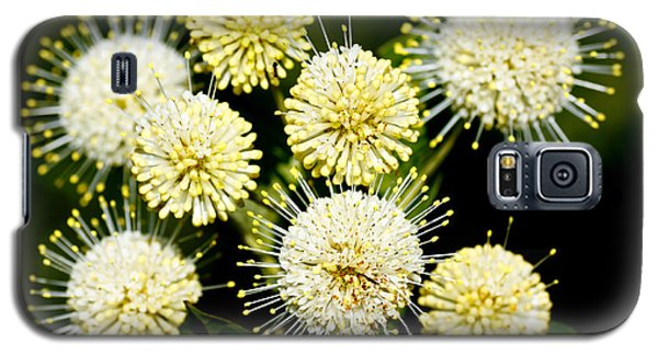 Buttonbush Galaxy S5 Case