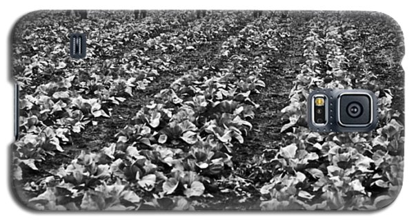 Galaxy S5 Case featuring the photograph Cabbage Farming by Ricky L Jones