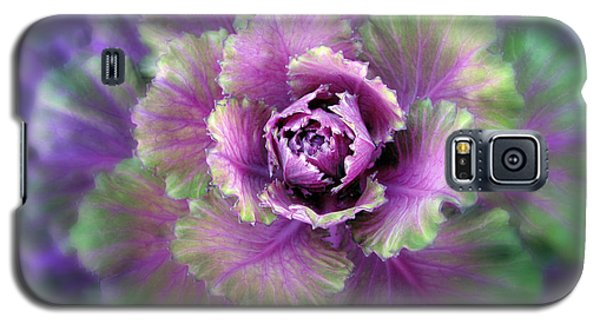 Cabbage Flower Galaxy S5 Case by Jessica Jenney