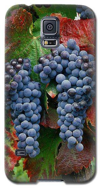 5b6374-cabernet Sauvignon Grapes At Harvest Galaxy S5 Case