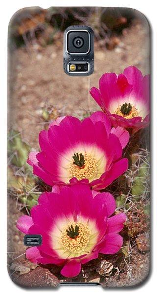 Cactus 1 Galaxy S5 Case