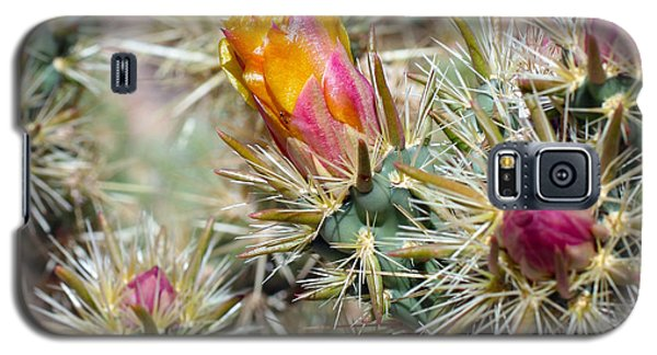 Cactus 17 Galaxy S5 Case