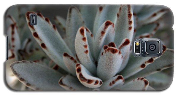 Cactus 4 Galaxy S5 Case