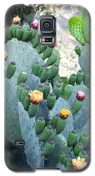 Cactus Buds And Flowers Galaxy S5 Case