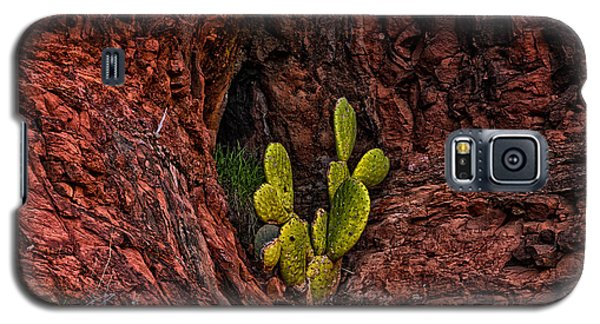 Cactus Dwelling Galaxy S5 Case by Mark Myhaver