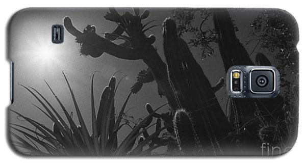 Galaxy S5 Case featuring the photograph Cactus Family - 2 by Kenny Glotfelty