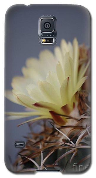 Cactus Flower Galaxy S5 Case by Anne Rodkin