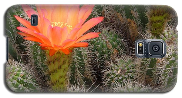 Galaxy S5 Case featuring the photograph Cactus Flower by Cheryl Del Toro