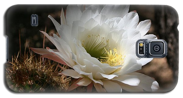 Cactus Flower Full Bloom Galaxy S5 Case by Tom Janca