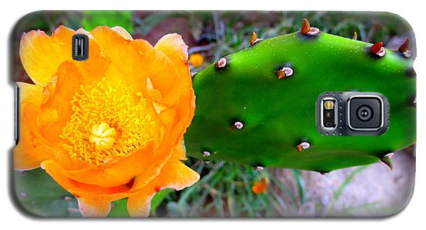Cactus Flower Galaxy S5 Case by Randall Weidner